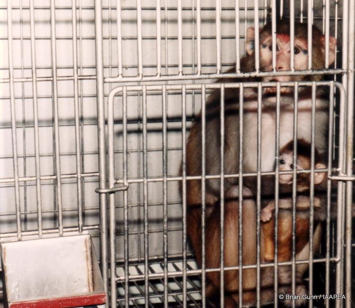 2 monkey-caged-animal-research-deprivation-lab-testing-image ok